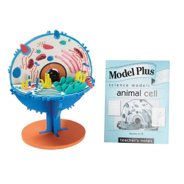 Model Plus: The Animal Cell