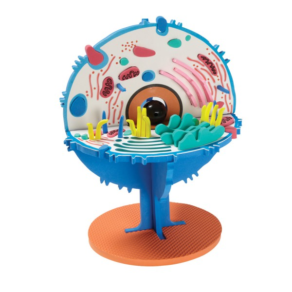 Model Plus: The Animal Cell (FRENCH)