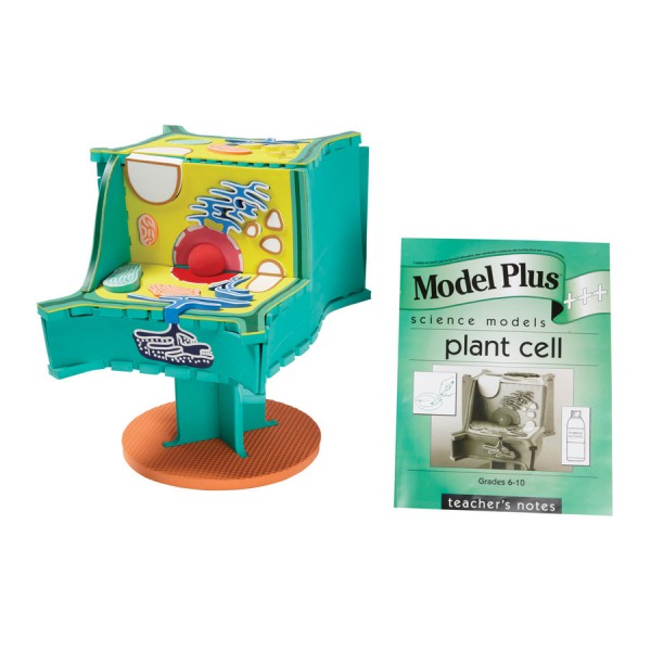 Model Plus: The Plant Cell